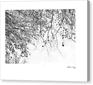 Autumn Tree In Black And White 3 Canvas Print by Xoanxo Cespon