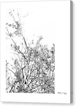 Autumn Tree In Black And White  Canvas Print by Xoanxo Cespon