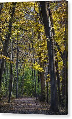 Autumn Trees Alley Canvas Print by Sebastian Musial