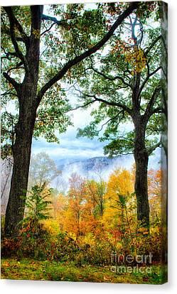 Autumn Trees In The Blue Ridge II Canvas Print by Dan Carmichael
