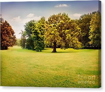 Autumn Trees Canvas Print by Mythja  Photography