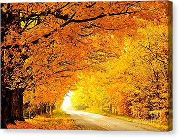 Autumn Tunnel Of Gold Canvas Print by Terri Gostola