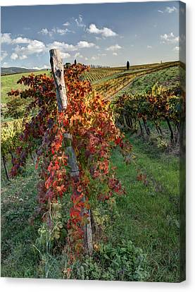 Autumn Vines Canvas Print by Eggers   Photography