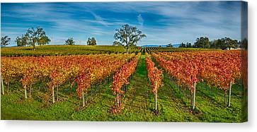 Autumn Vineyard At Napa Valley Canvas Print by Panoramic Images
