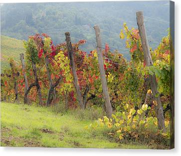 Autumn Vineyard Canvas Print by Eggers   Photography