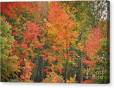 Autumn Woods Canvas Print by Mary Carol Story