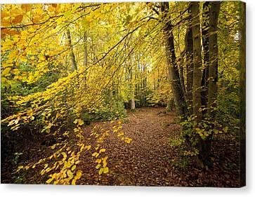 Autumnal Woodland II Canvas Print by Natalie Kinnear