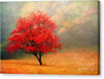 Autumns Colors Canvas Print by Darren Fisher