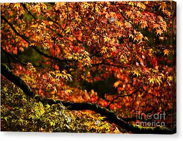 Autumn's Glory Canvas Print by Anne Gilbert