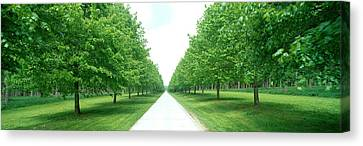 Avenue At Chateau De Modave Ardennes Canvas Print by Panoramic Images