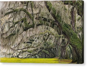 Avenue Of Oaks Canvas Print by Joseph Rossbach