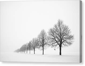 Avenue With Row Of Trees In Winter Canvas Print by Matthias Hauser