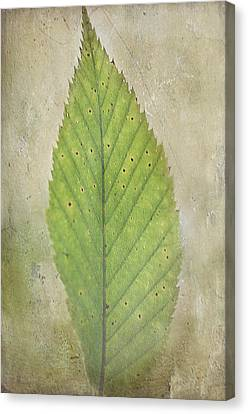 Awakening Canvas Print by Faith Simbeck