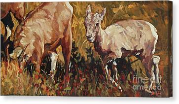 Baby Big Horn Canvas Print by Patricia A Griffin