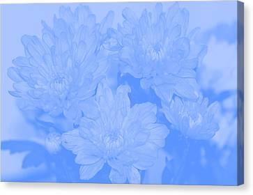 Baby Blue 2 Canvas Print by Carol Lynch