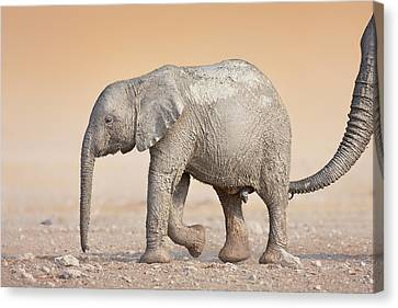 Baby Elephant  Canvas Print by Johan Swanepoel
