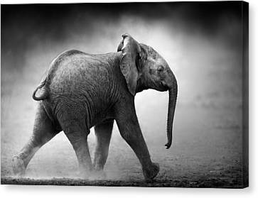 Baby Elephant Running Canvas Print by Johan Swanepoel