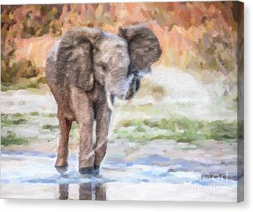 Baby Elephant Spraying Water Canvas Print by Liz Leyden