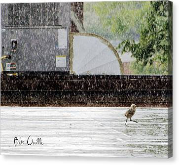 Baby Seagull Running In The Rain Canvas Print by Bob Orsillo