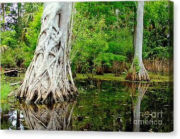 Backcountry Canvas Print by Carey Chen