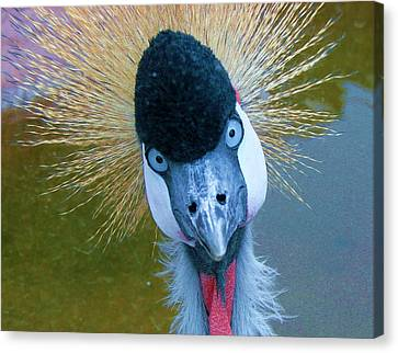 Bad Hair Day Canvas Print by Margaret Bobb
