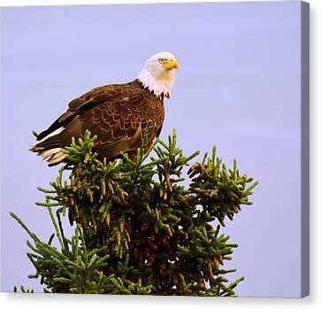 Bald Eagle Canvas Print by Debra  Miller