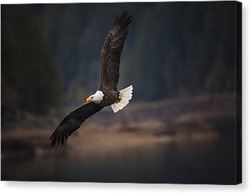 Bald Eagle In Flight Canvas Print by Mark Kiver