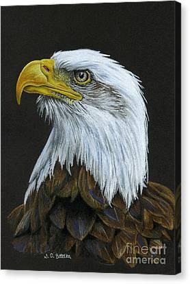 Bald Eagle Canvas Print by Sarah Batalka