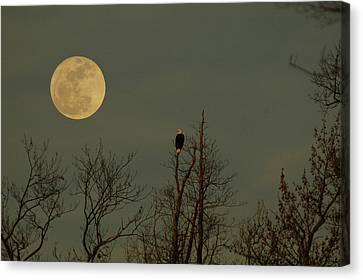 Bald Eagle Watching The Full Moon Canvas Print by Raymond Salani III