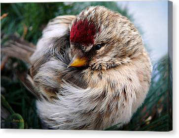Ball Of Feathers Canvas Print by Christina Rollo
