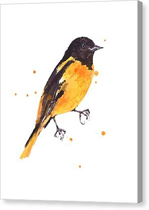 Baltimore Oriole Beauty Canvas Print by Alison Fennell