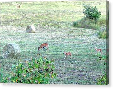 Bambi And The Twins  Canvas Print by Will Borden