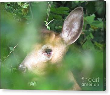 Bambi In The Woods Canvas Print by David Lankton