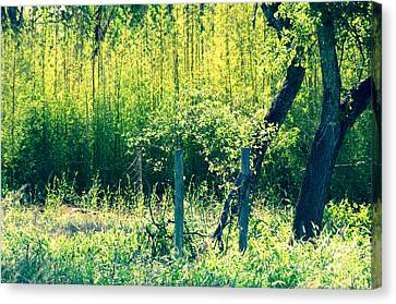 Bamboo Background Canvas Print by Gary Richards