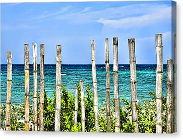 Bamboo Fence Canvas Print by Keith Ducker