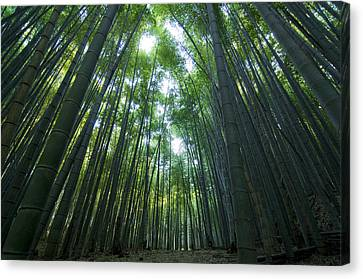 Bamboo Forest Canvas Print by Aaron S Bedell