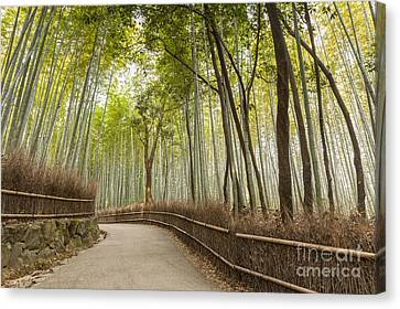 Bamboo Forest Arashiyama Kyoto Japan Canvas Print by Colin and Linda McKie