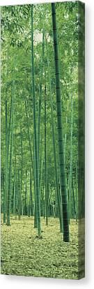 Bamboo Forest Nagaokakyo Kyoto Japan Canvas Print by Panoramic Images