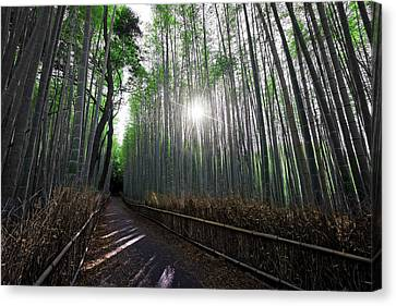 Bamboo Forest Path Of Kyoto Canvas Print by Daniel Hagerman
