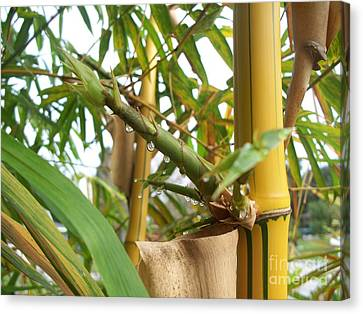 Bamboo  Canvas Print by Heather Duncan