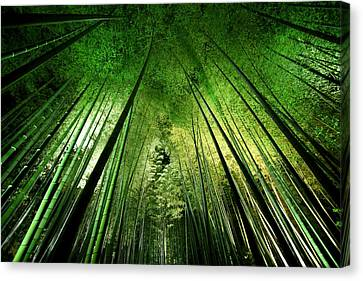 Bamboo Night Canvas Print by Takeshi Marumoto