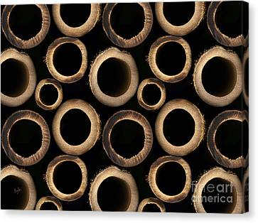 Bamboo Rings Canvas Print by Bedros Awak