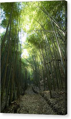 Bamboo Road Canvas Print by Aaron S Bedell