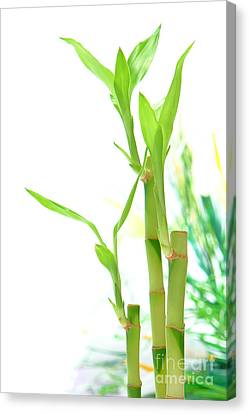 Bamboo Stems And Leaves Canvas Print by Olivier Le Queinec