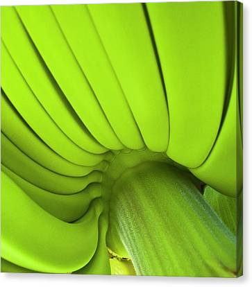 Banana Bunch Canvas Print by Heiko Koehrer-Wagner