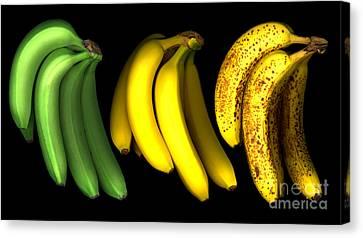 Bananas Canvas Print by Tony Cordoza