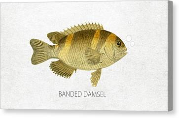 Banded Damsel Canvas Print by Aged Pixel