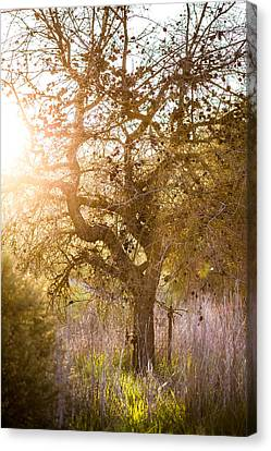 Bare Tree Canvas Print by Mike Lee