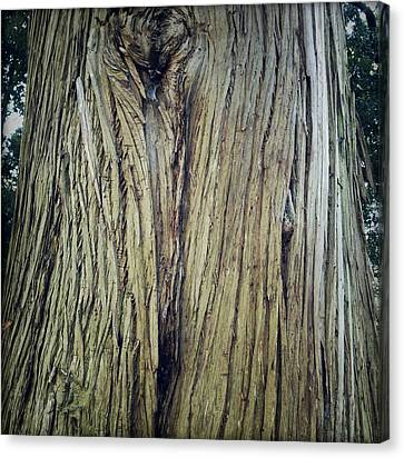 Bark Canvas Print by Les Cunliffe