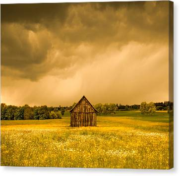 Barn In A Field Of Wildflowers Canvas Print by Panoramic Images